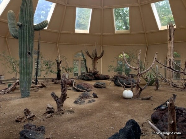 A desert landscape at ZooAmerica that features roadrunners, rabbits, and other desert animals.