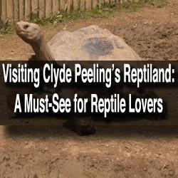 Clyde-Peeling-Reptiland-Allenwood-PA