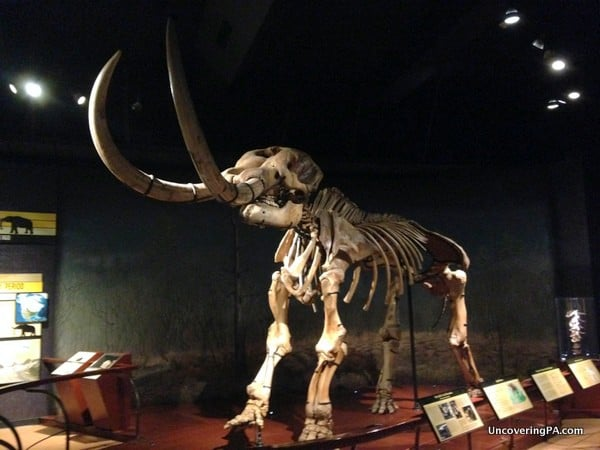 The impressive fossilized remains of the Marshall Creek Mastodon at the State Museum of Pennsylvania.