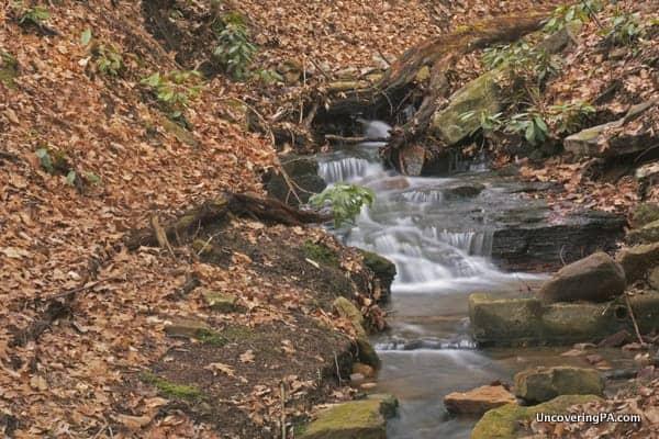 A series of scenic rapids just above Adams Falls in Linn Run State Park.