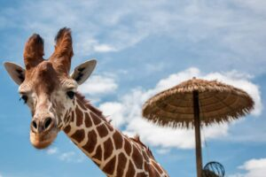 10 Fun Zoos in PA to Visit