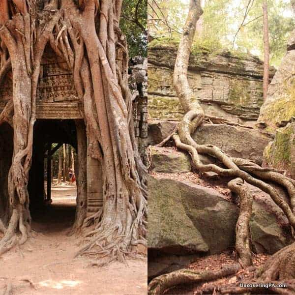 On the left, an ancient Cambodian temple. On the right, Bilger's Rocks.