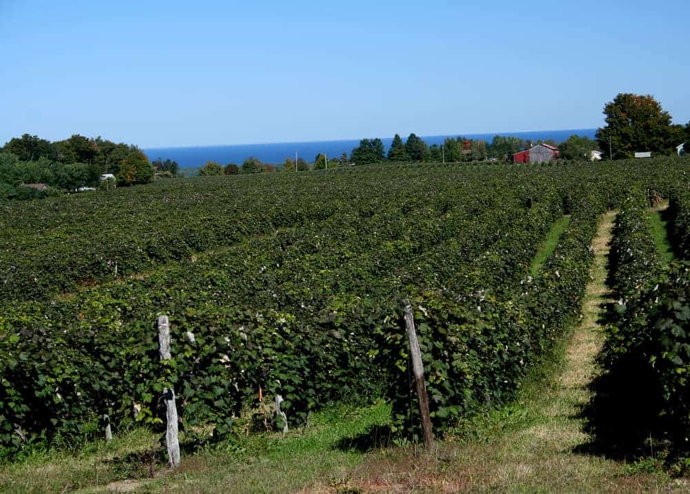 Visiting the Lake Erie Wine Country