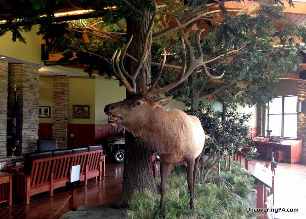 Visiting the Elk County Visitor Center in Benezette, Pennsylvania.