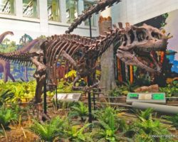 Exploring Dinosaurs, Gems, and World History at the Fantastic Carnegie Museum of Natural History