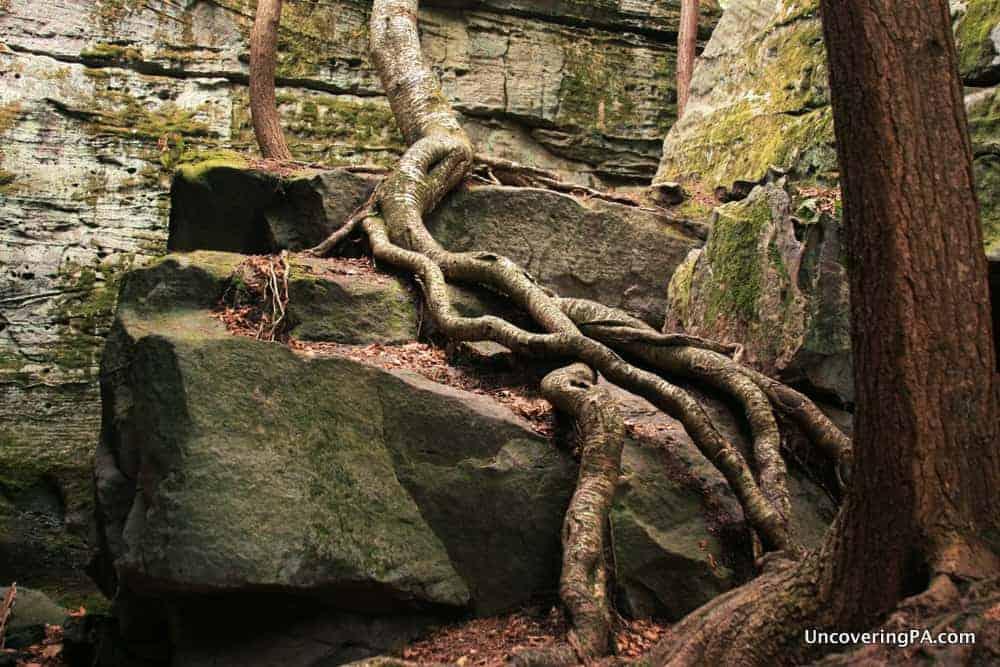BIlger's Rocks in Clearfield County, Pennsylvania.
