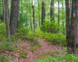 7 Fantastic Things to Do in Cook Forest State Park