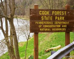 5 Fantastic Reasons to Visit Cook Forest State Park
