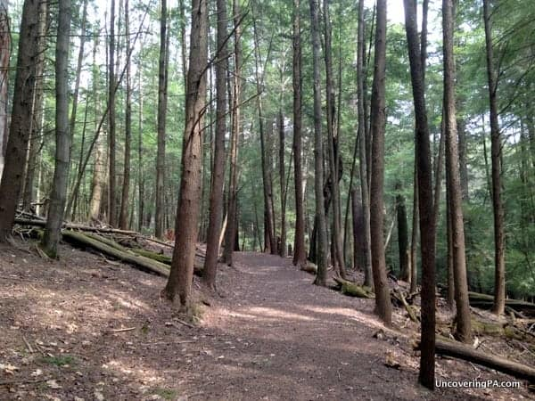 Hiking in the Forest Cathedral in Cook Forest State Park
