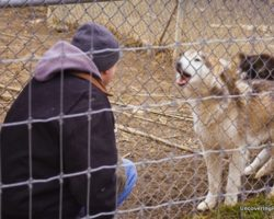 Howling with Wolves at the Wolf Sanctuary of PA