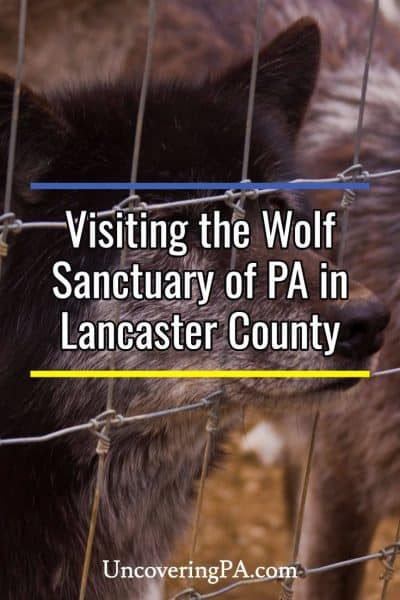 Wolf Sanctuary of Pennsylvania