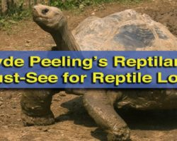 Clyde Peeling's Reptiland: A Reptile Lover's Dream Come True