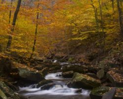 31 Insanely Beautiful Places to View Fall Foliage in PA
