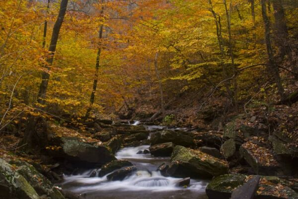 See Fall foliage in October