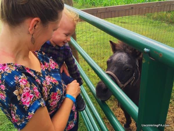 Petting Zoo Fields of Adventure