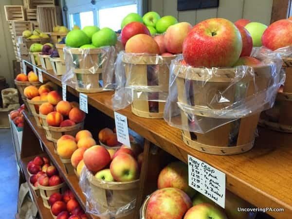 Apples in an orchard store in PA