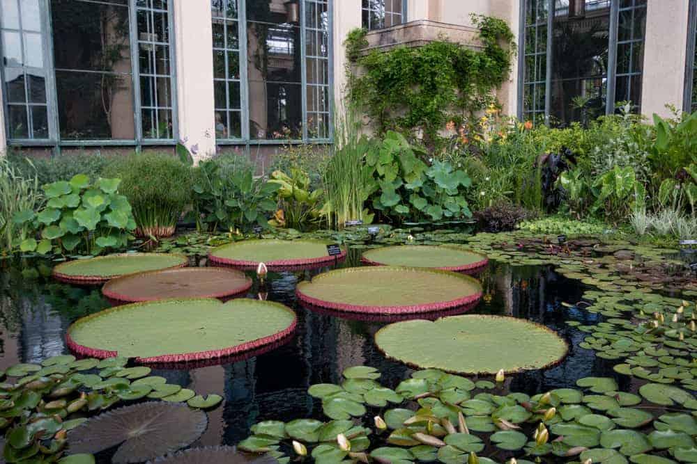 Interesting Plants At Longwood Gardens In Kennett Square Pennsylvania