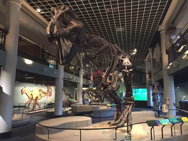 Best things to do in Philly with kids: Academy of Natural Sciences