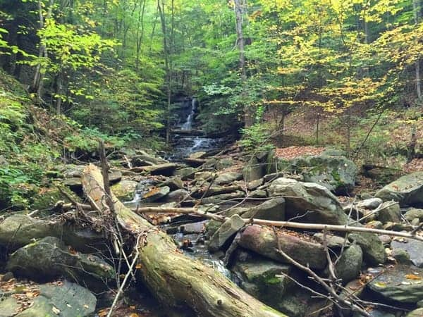 Hounds Run Falls in Loyalsock State Forest