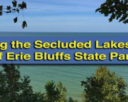 Hiking the Secluded Forests of Erie Bluffs State Park