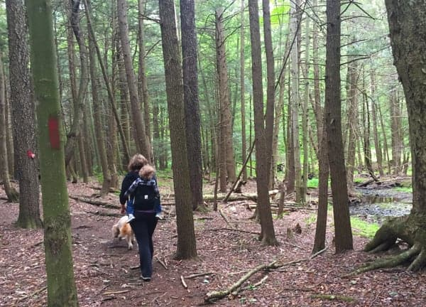 Cliff Trail in Prompton State Park in the Pennsylvania Poconos