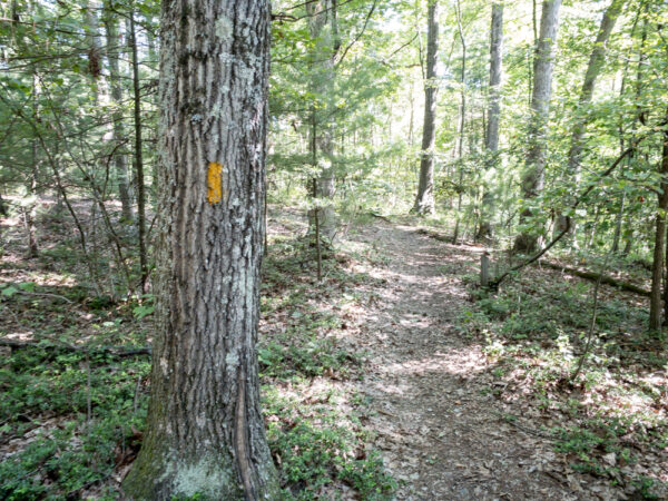 Trail through the Hoverter and Sholl Box Huckleberry Natural Area in Perry County Pennsylvania