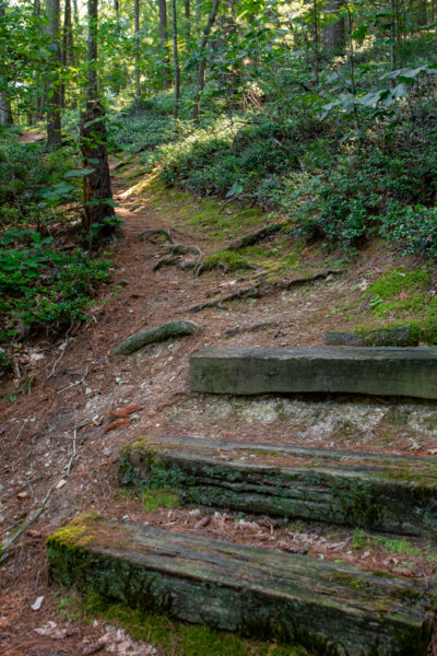 Steps along the trail through the Hoverter and Sholl Box Huckleberry Natural Area