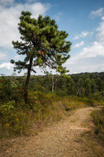 Hiking the Nottingham Serpentine Barrens in Nottingham, Pennsylvania.