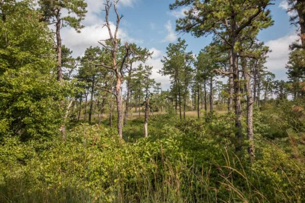 Hiking through the Nottingham Serpentine Barrens in Chester County, Pennsylvania