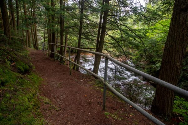 Upper Fall Brook Falls viewing area in Tioga State Forest