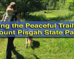 Hiking the Peaceful Trails of Mount Pisgah State Park in Bradford County