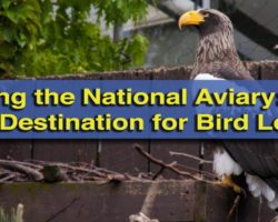 Visiting the National Aviary in Pittsburgh: PA's Best Destination for Bird Lovers