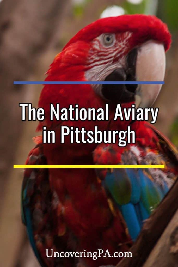 Visiting the National Aviary in Pittsburgh