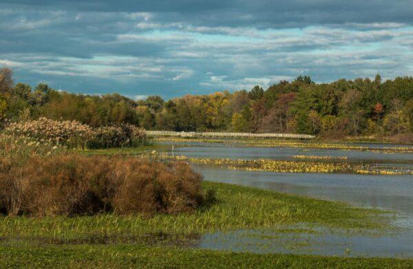 Fall foliage the John Heinz National Wildlife Refuge in Philadelphia, Pennsylvania