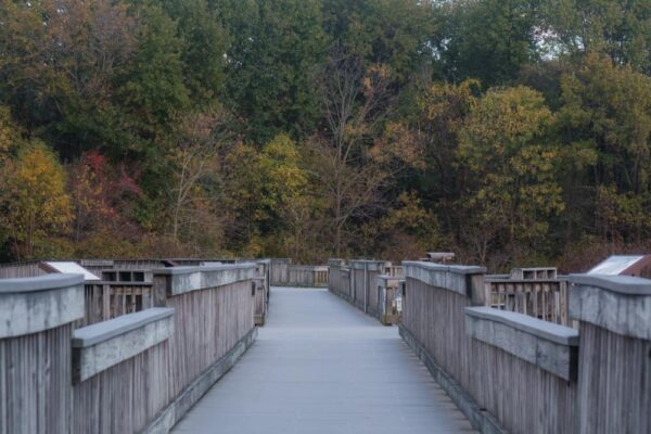 Boardwalk at the John Heinz National Wildlife Refuge in Philadelphia, Pennsylvania.