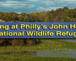 Exploring the Scenic Hiking Trails at John Heinz National Wildlife Refuge in Philadelphia