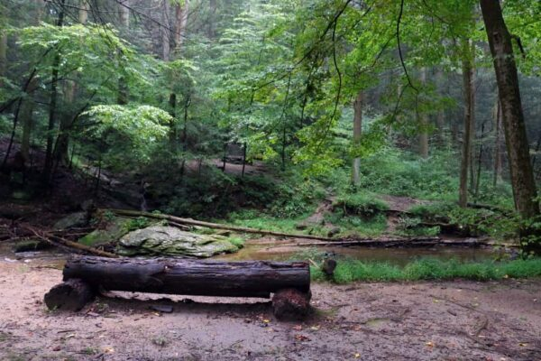 Wooden bench in Tucquan Glen Nature Preserve