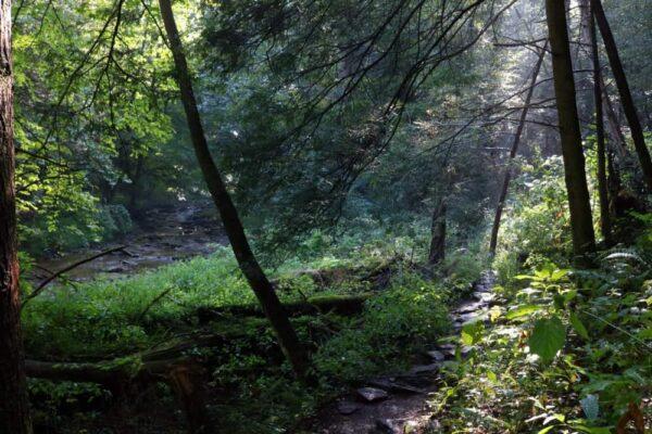 Tucquan Glen trails
