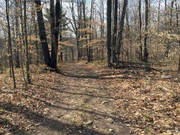 Trail to Choke Creek Falls in Pennsylvania