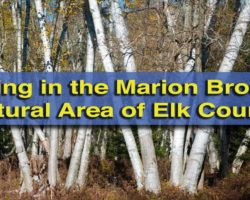 Hiking in the Marion Brooks Natural Area in the Quehanna Wild Area