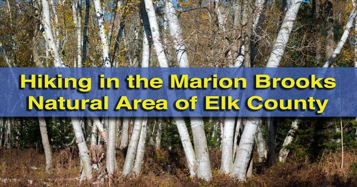 Hiking in the Marion Brooks Natural Area of Elk County, Pennsylvania