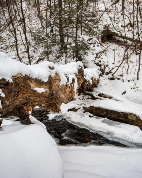 Winter at Ricketts Glen State Park