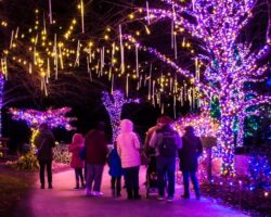 Strolling Through the Festive Winter Light Spectacular at the Lehigh Valley Zoo