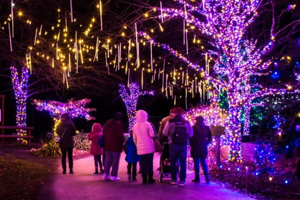 Winter Light Spectacular at the Lehigh Valley Zoo
