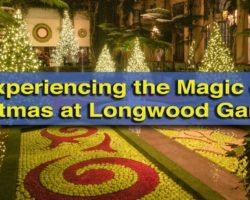 Experiencing the Magic of Christmas at Longwood Gardens