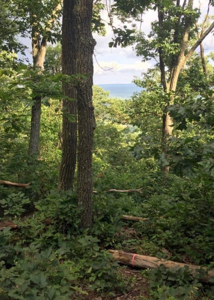 Mount Nittany Hike in State College, Pennsylvania