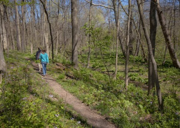 Hiking through the Wildflower Reserve in Raccoon Creek State Park.