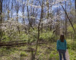 Hiking through the Colorful Wildflower Reserve at Raccoon Creek State Park