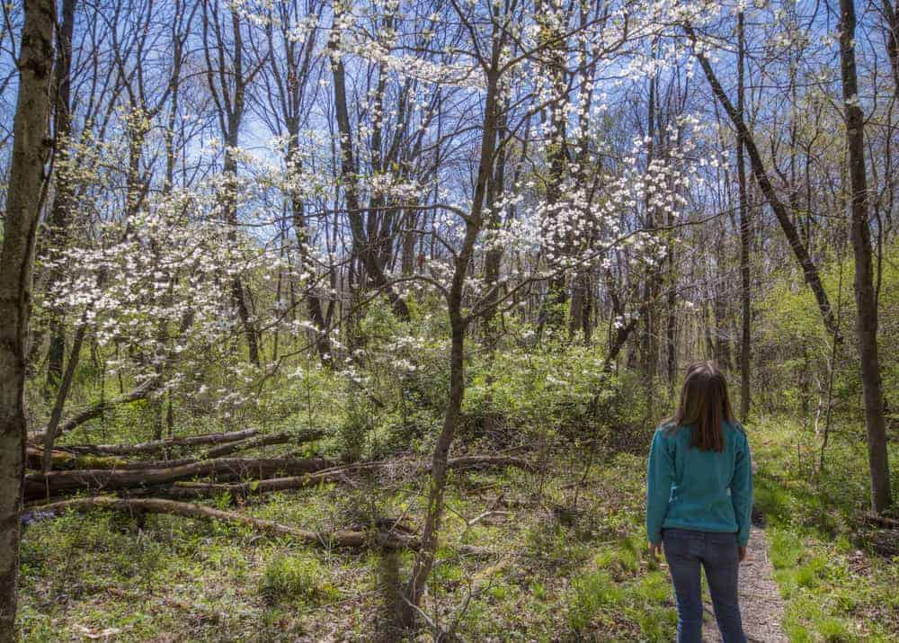 Hiking the Wildflower Reserve at Raccoon Creek State Park