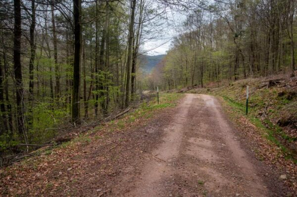 Grassy Hollow Road in State Game Lands 13